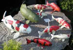 Koi Collectables